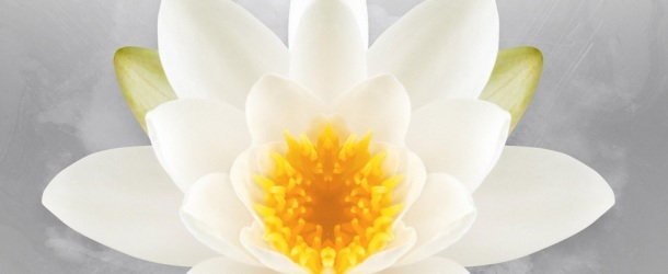 Markus Schulz presents 'In Bloom Volume One'