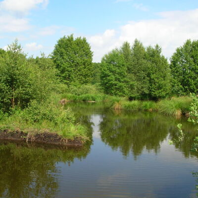 Marais de Germont