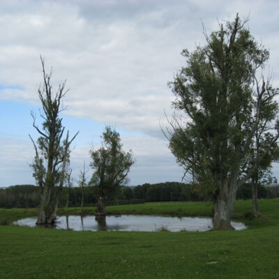 Étangs entre Boult-aux-Bois et Germont