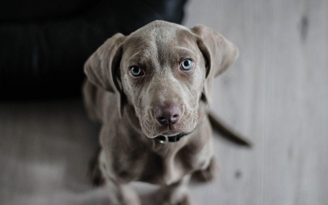 9 signes que votre animal de compagnie règne en maître dans votre maison