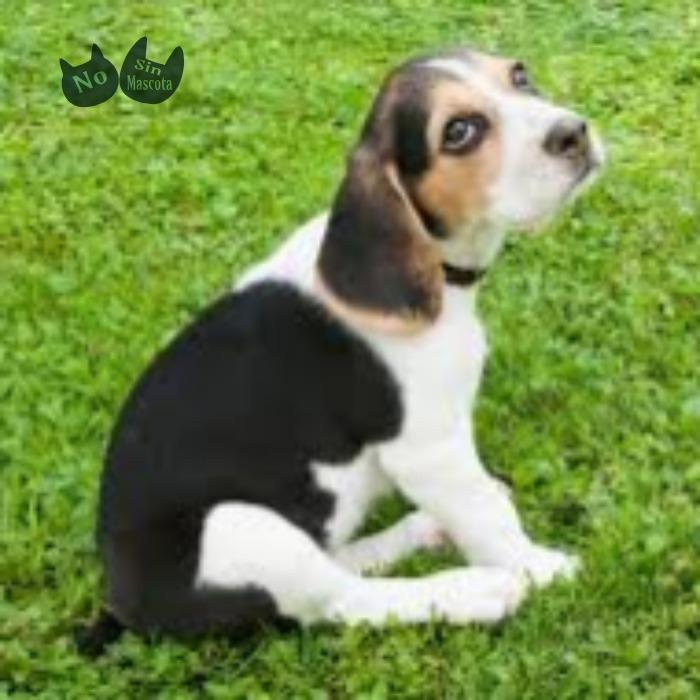beagle4.jpg