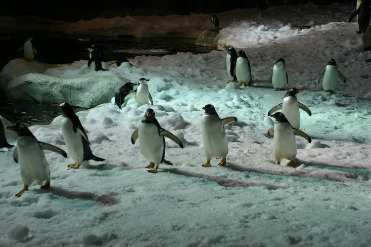 Logo Dormir con Pingüinos
