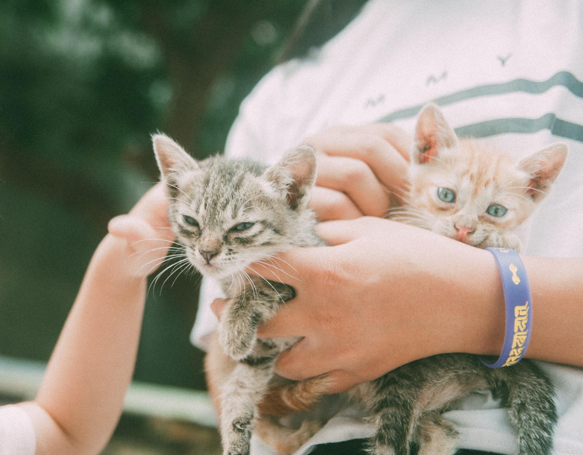 maladie des griffes du chat