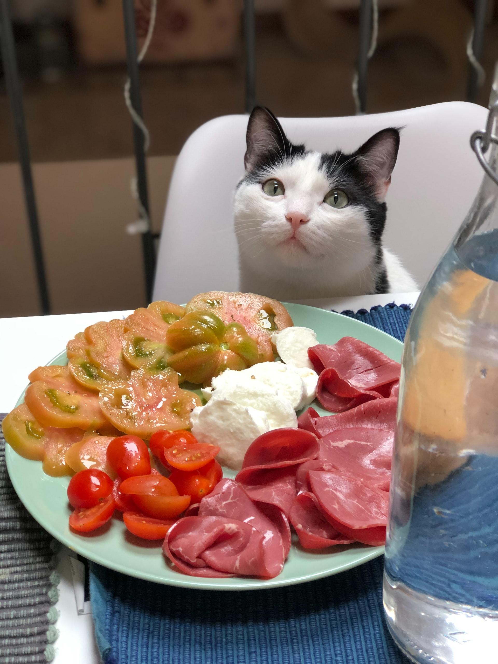 croquette chat dietetique