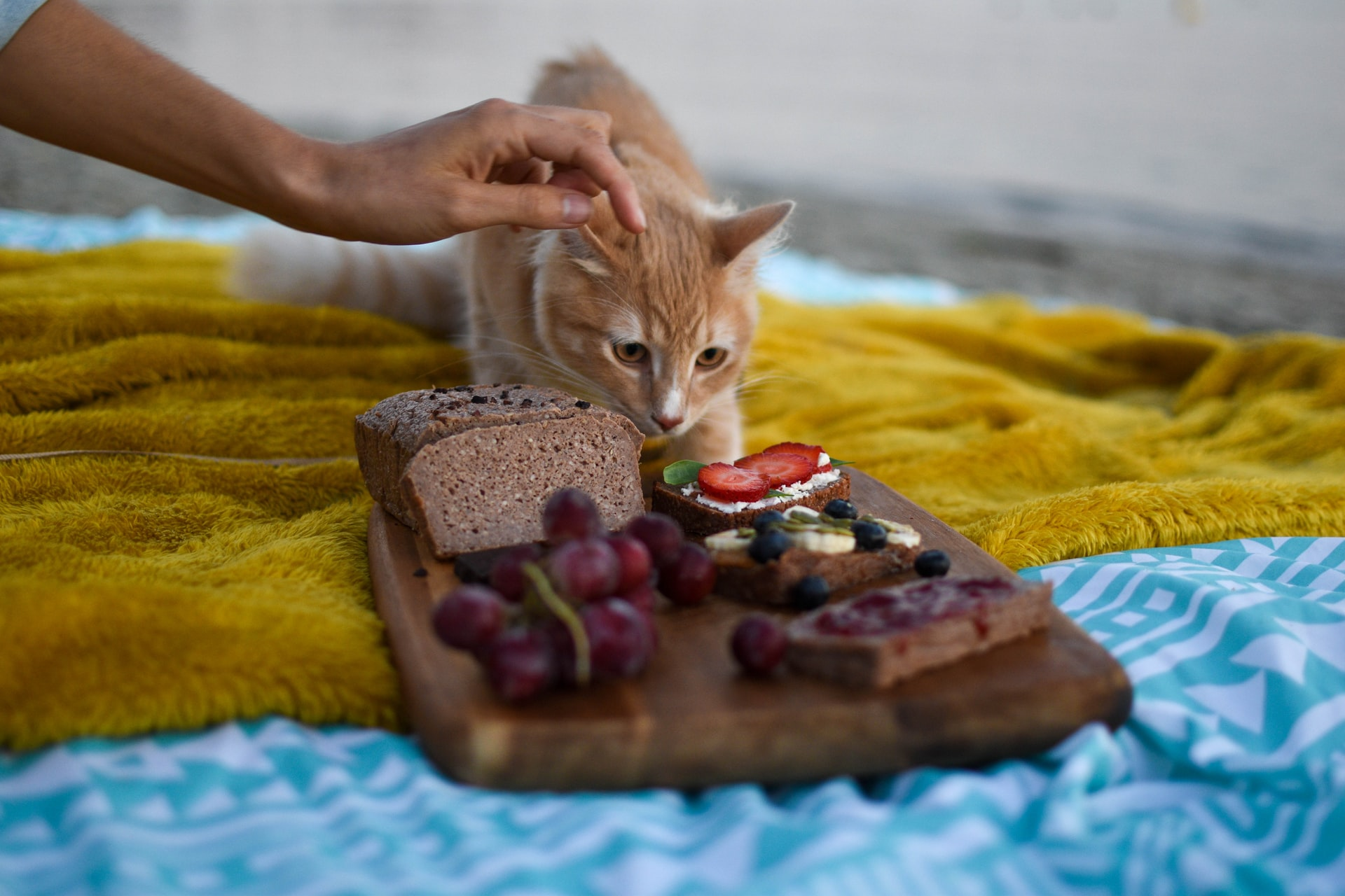 croquette chat riche en fibre
