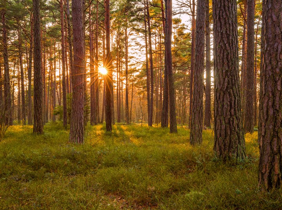 provenance bois abri de jardin