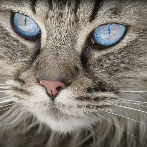 Alergia a los gatos
