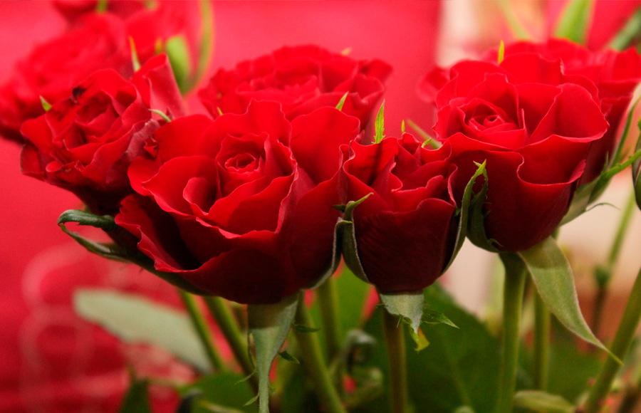 Flores de Chipiona. ¡ Sonríe! ¡ Siente! ¡ Vive!