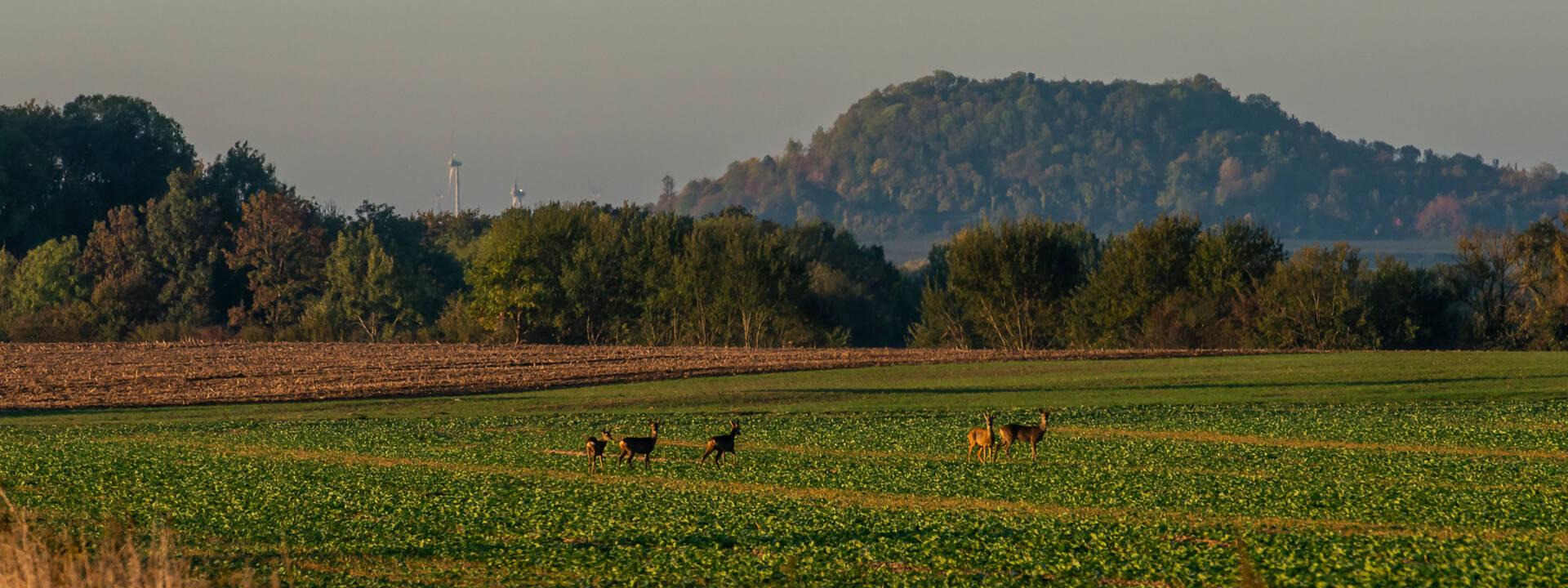 Le Porcien - Les Monts de Sery
