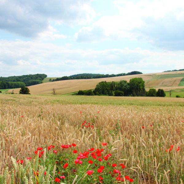 Paysage à proximité de la commune de Warnécourt