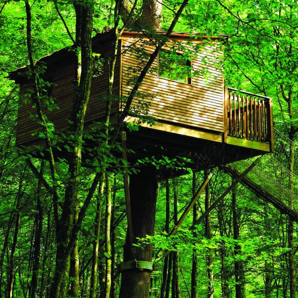 Cabane du Chêne Perché à Signy l'Abbaye