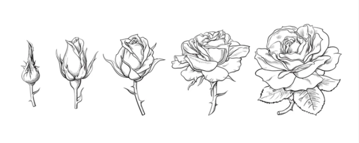dessin rose