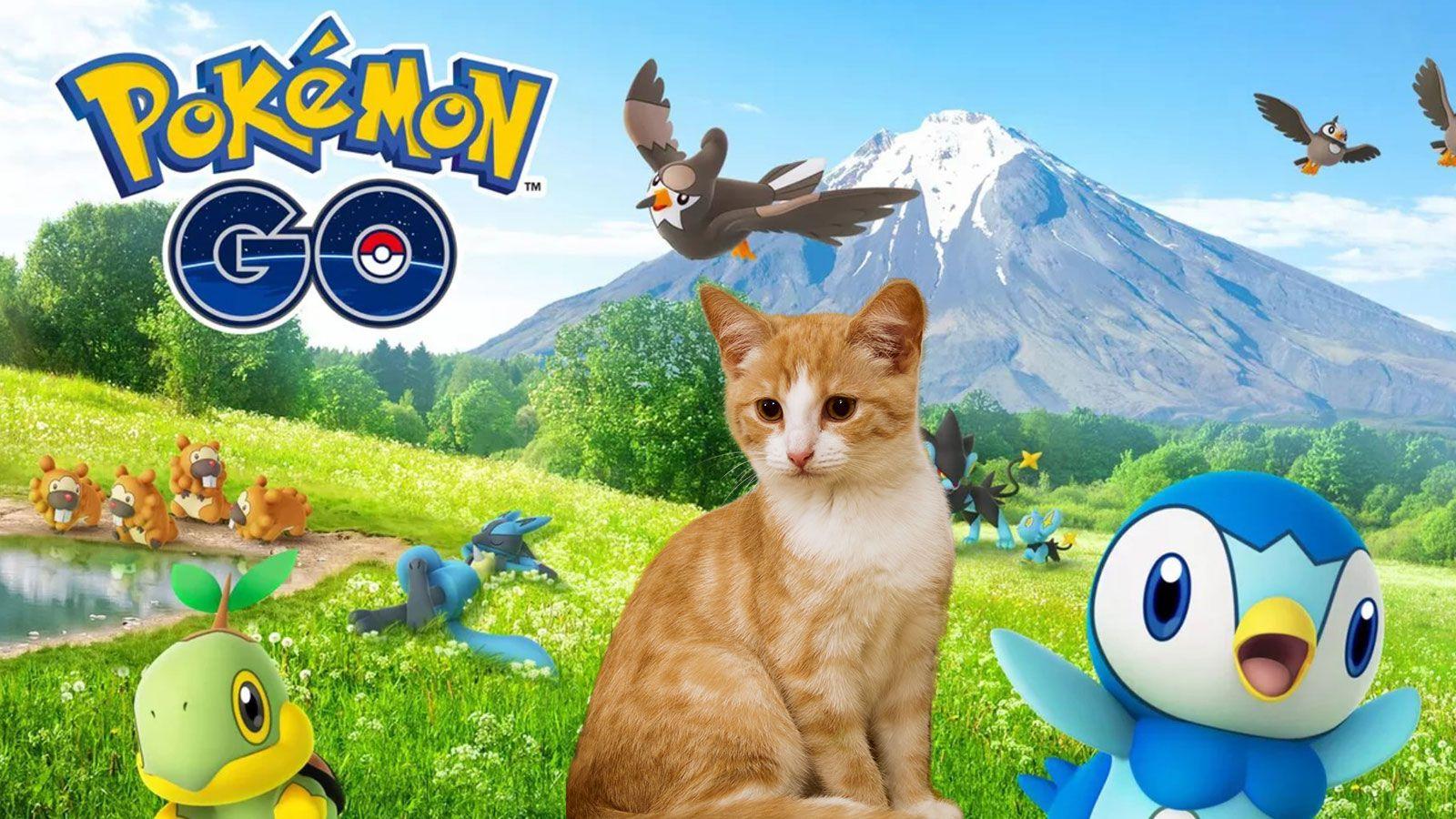 Un chat joue à Pokémon GO