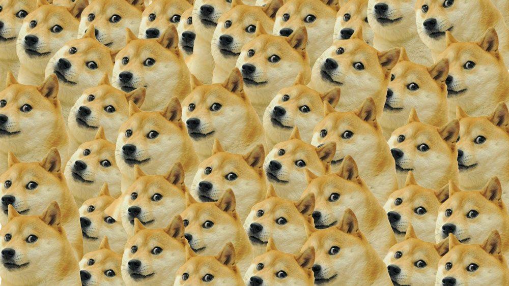 Le mème Doge