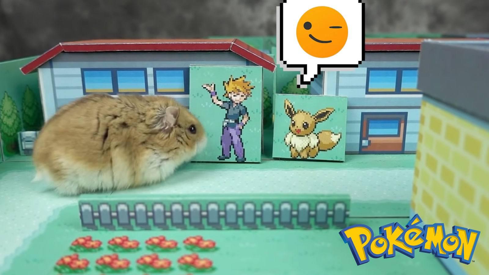 Labyrinthe Pokémon pour hamster