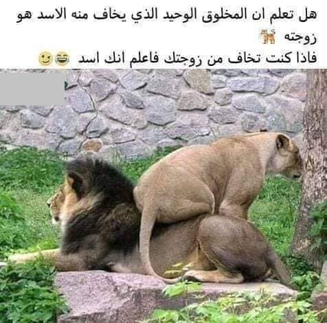خوف الاسد