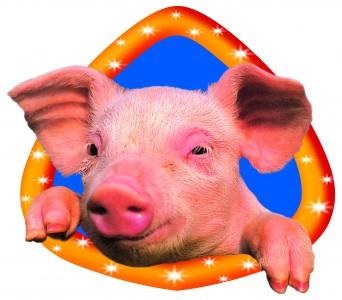 Le Cochon à L'oreille