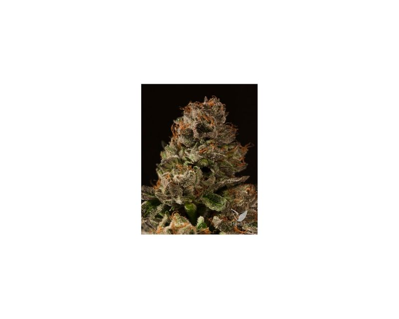 300058-strawberry-sour-diesel-reg.jpg