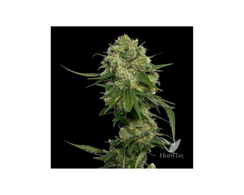 302313-dna-genetics-chocolope-1.jpg