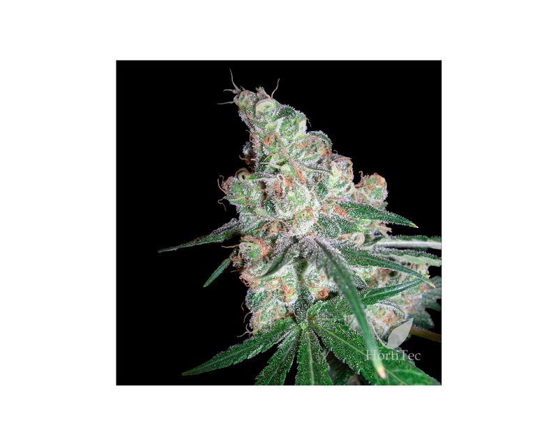 302313-dna-genetics-chocolope-2.jpg
