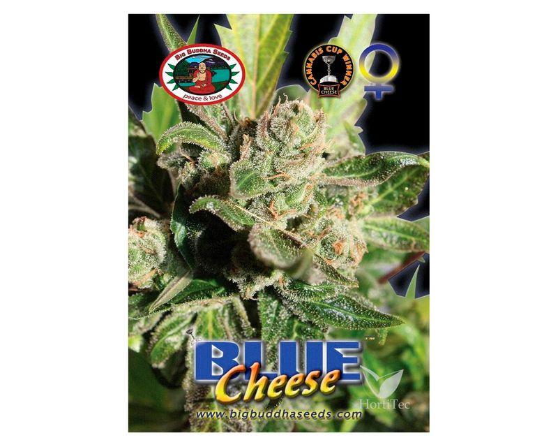 310821-blue-cheese.jpg