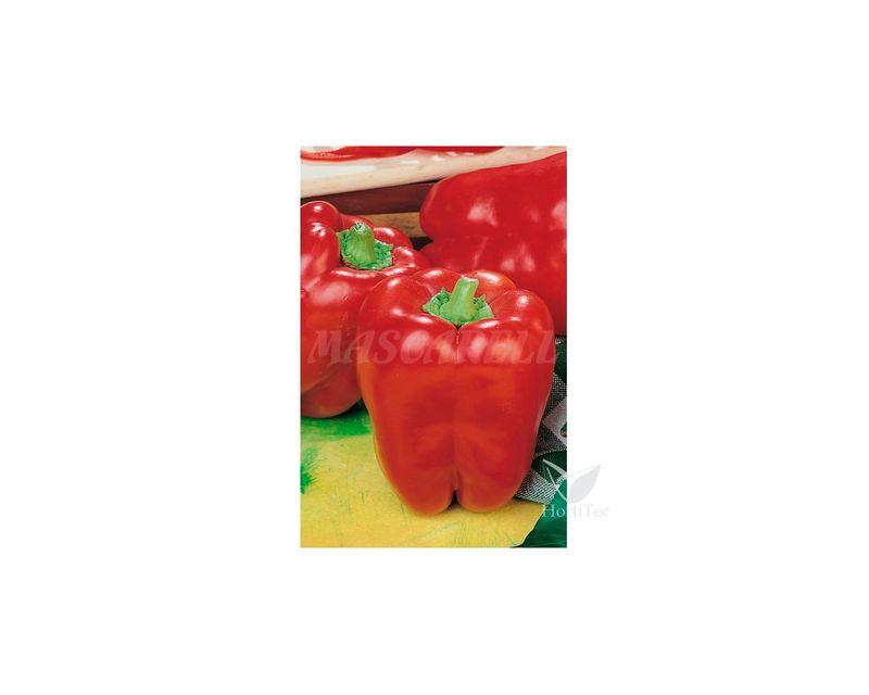351145-pimiento-cuadrado-de-asti-rojo-rainbow-eco.jpg