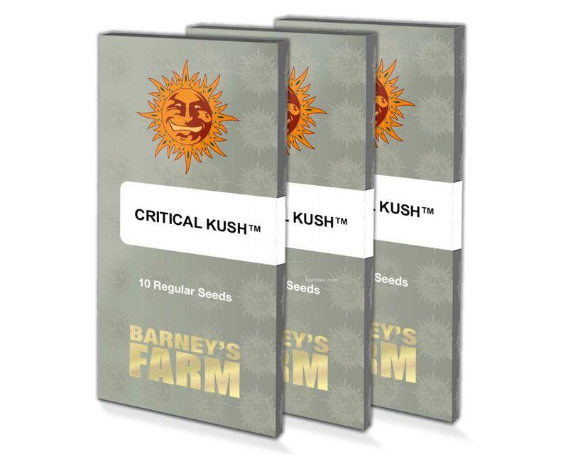 Critical Kush (10)
