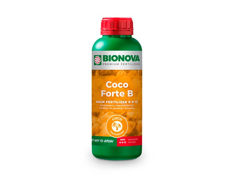 Coco Forte B
