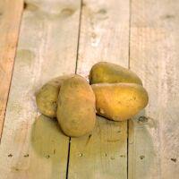 Pomme de terre Argria (purée)