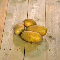 Pomme de terre Ditta (vapeur)