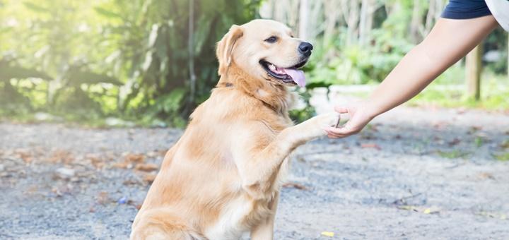 Cómo elegir un buen curso de adiestramiento canino