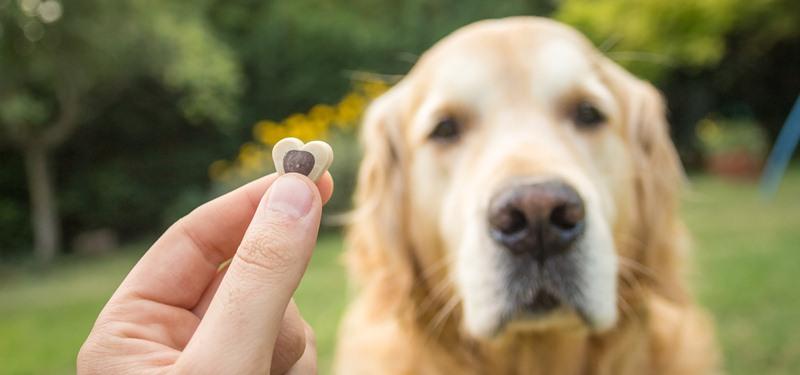 Guía de premios saludables y perjudiciales para el adiestramiento canino