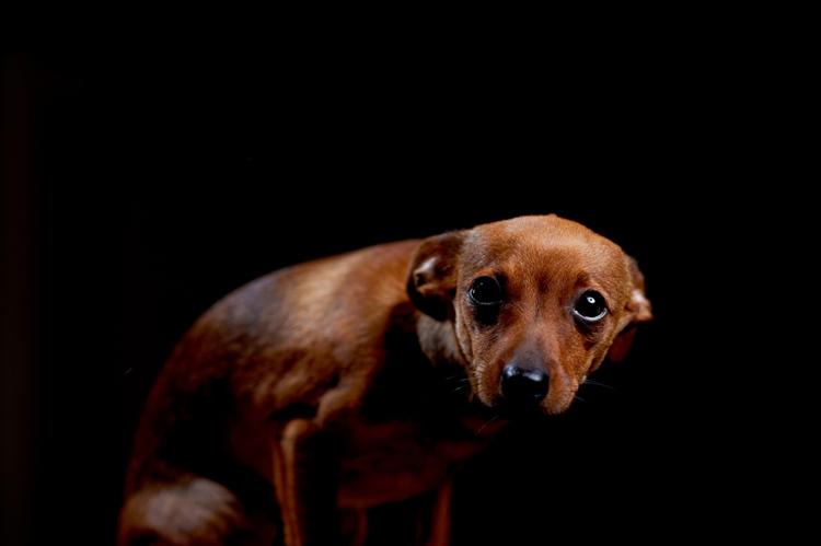 Mi perro tiene miedo. Curso de Adiestramiento Canino