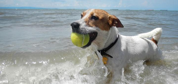 Consejos para que disfrutéis tú y tu perro en la playa (autorizada)