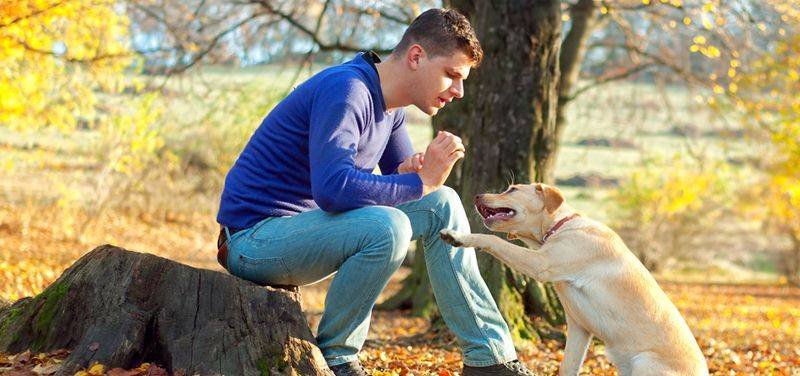 Las mejores técnicas cognitivas-emocionales de adiestramiento canino