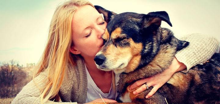 Precauciones con la salud de nuestro perro en vacaciones: Leishmaniosis Canina