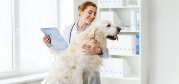 ¿Cuáles son las funciones de un auxiliar de clínica veterinaria?