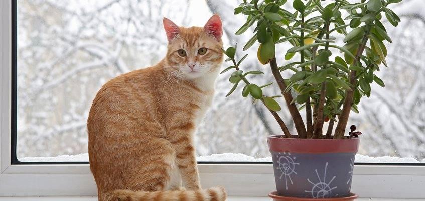 Jardinería: Consejos para cuidar nuestras plantas en invierno