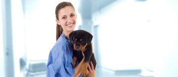 4 enfermedades comunes en perros