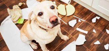 Corregir la ansiedad por separación en perros