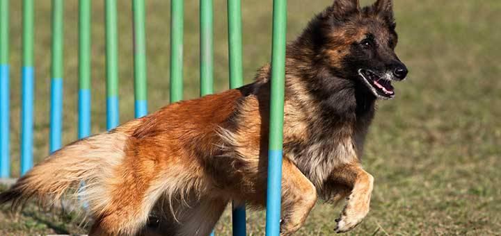 Quiero ser adiestrador canino