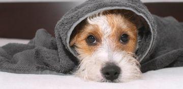 Miedo a los ruidos en perros. Consejos