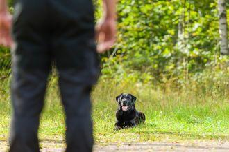 Prácticas de adiestramiento canino. La experiencia de Eva Cadenas