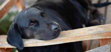 Estudiar psicología canina