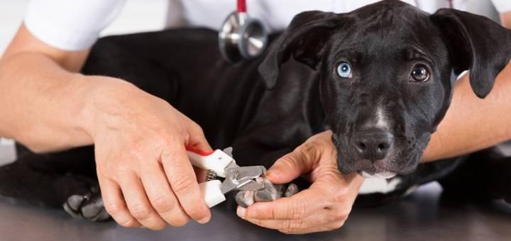La peluquería canina estética y salud para tu perro