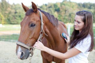 Cursos de caballos: trabaja en el mundo equino