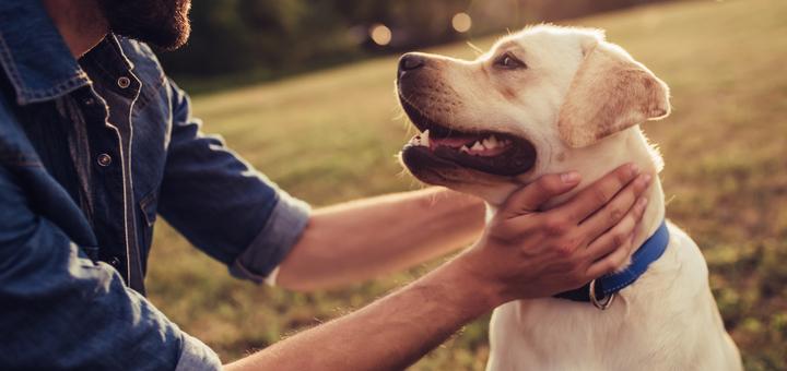 ¿Cuáles son los perros más longevos?