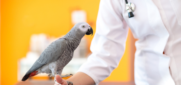 Animales exóticos que pueden ser tu mascota