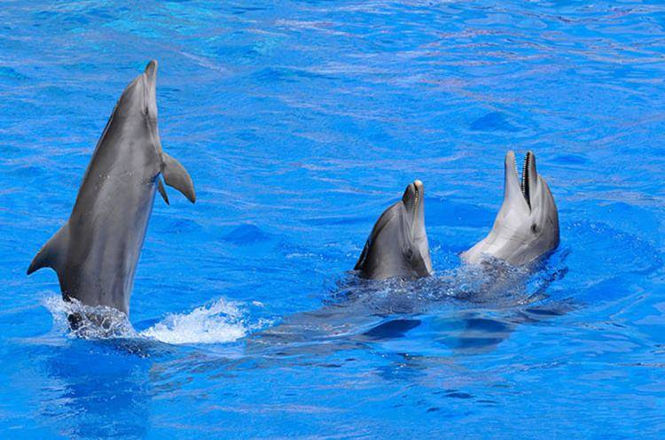 Curso de Especialista en Cetáceos y otros Animales Marinos