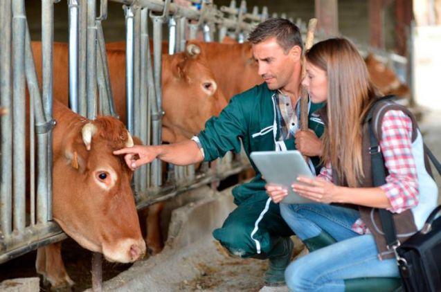 Curso de Auxiliar Veterinario de Animales de Granja